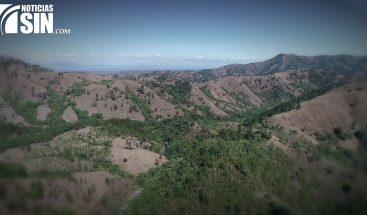 Deforestación, miles de árboles enfermos, ríos secos o disminuidos