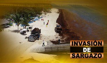 INVASIÓN DE SARGAZO