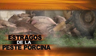 ESTRAGOS DE LA PESTE PORCINA